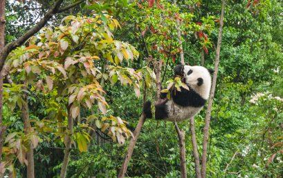 【编程&数据处理】pandas 1 | 入门,SO EASY!!!
