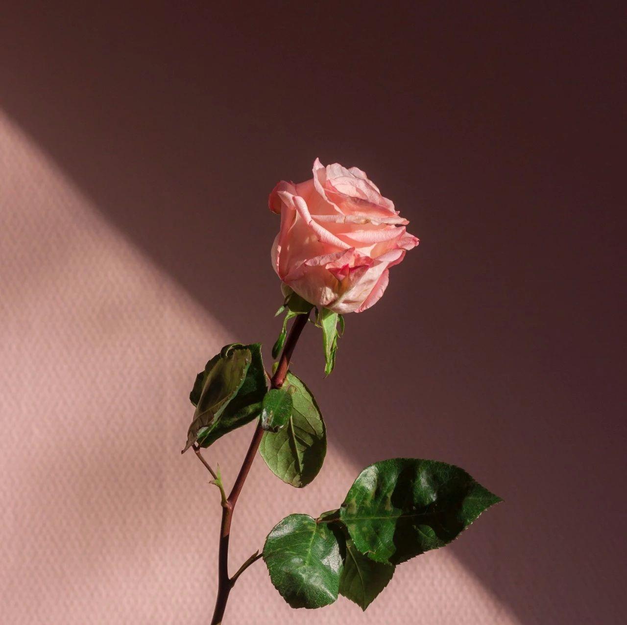这个关于春招必考的爱情故事,写出了贝叶斯的前世今生